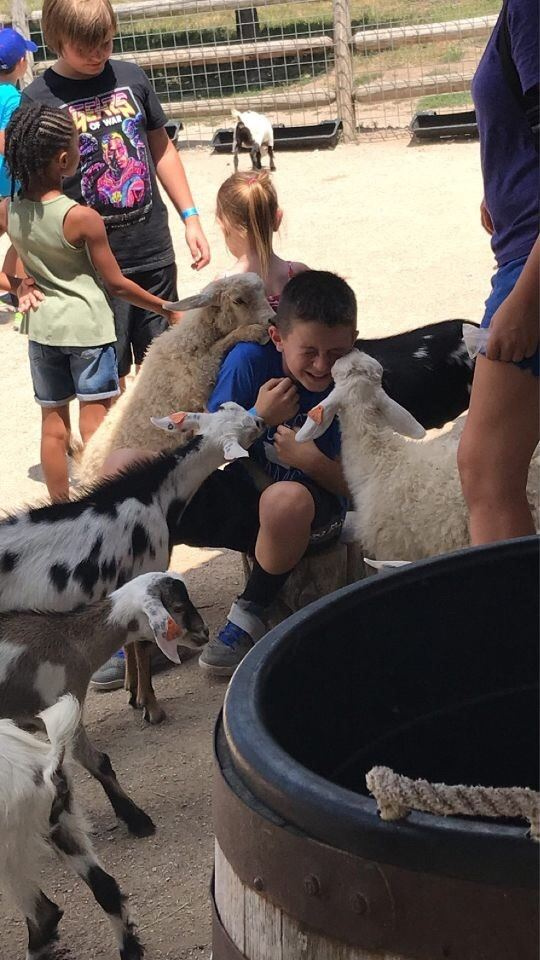 kid with goats