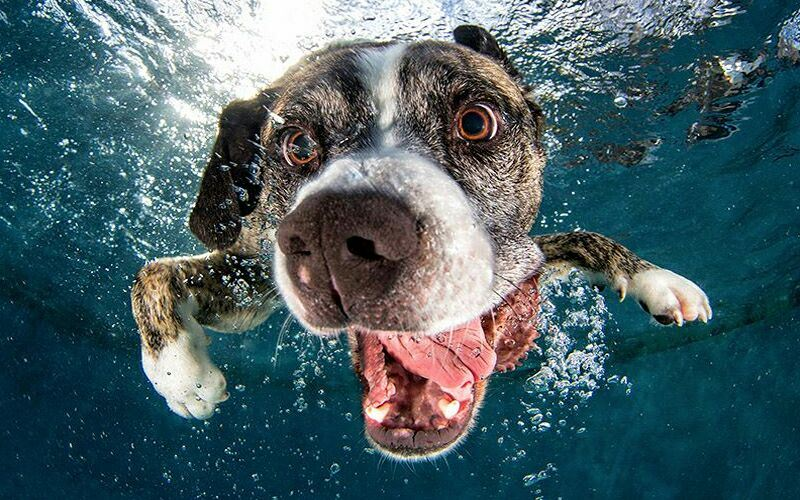seth-casteel-underwater-dogs-photography-black and white dog swimming